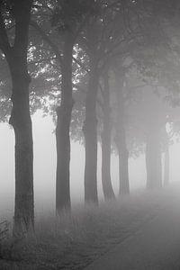 Bomen langs de weg van