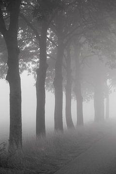 Bomen langs de weg von Elroy Spelbos