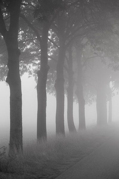 Bomen langs de weg van Elroy Spelbos