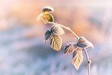 Frost on the leaves sur Christa Thieme-Krus