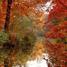 Herfst van Violetta Honkisz