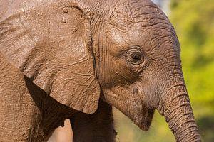 Jonge olifant. van