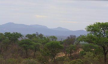 Kruger Park van Marjolein Martens