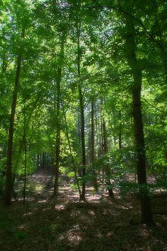 Zonlicht valt zacht tussen de bomen. van Jurjen Jan Snikkenburg