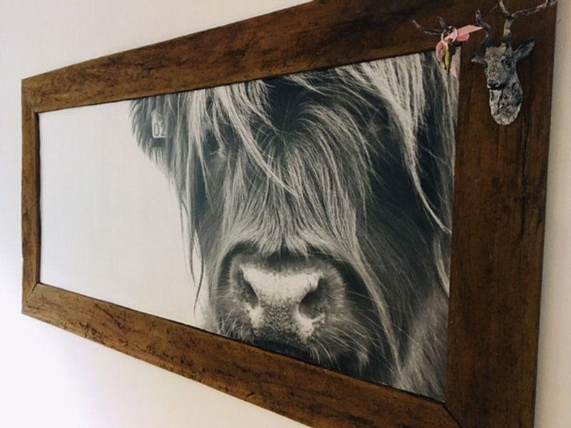 Klantfoto: Portret Schotse Hooglander zwart-wit van Sandra van Kampen, op behang