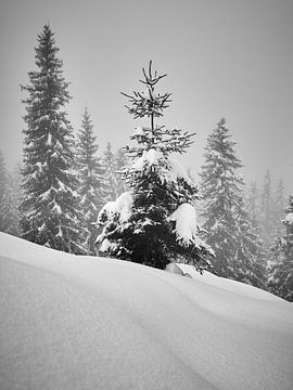 Kiefern im Nebel von Keith Wilson Photography