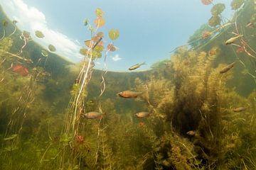 Onderwaterlandschap van Matthijs de Vos