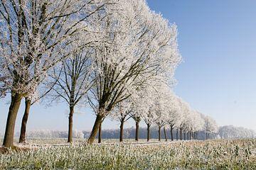 winterse bomenrij 1 Sint-Michielsgestel von Arnoud Kunst
