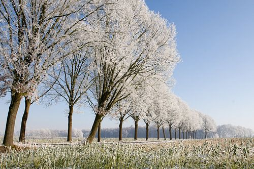 winterse bomenrij 1 Sint-Michielsgestel