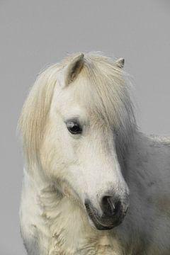 White horse von marjan woudstra