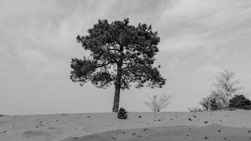 Nationaal Park De Loonse en Drunense Duinen, van Freddie de Roeck