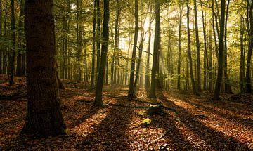 Chaque arbre a son ombre sur Joris Pannemans - Loris Photography