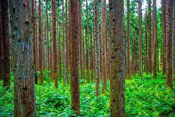 Japans Bos van Sander van Geest