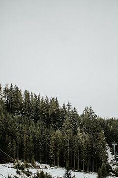 Kiefern in einer verschneiten Landschaft | Farbenfrohe Reisefotografie | von Trix Leeflang