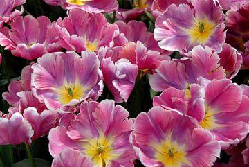 rosa Tulpen mit gelbem Herzen in Nahaufnahme von Carmela Cellamare