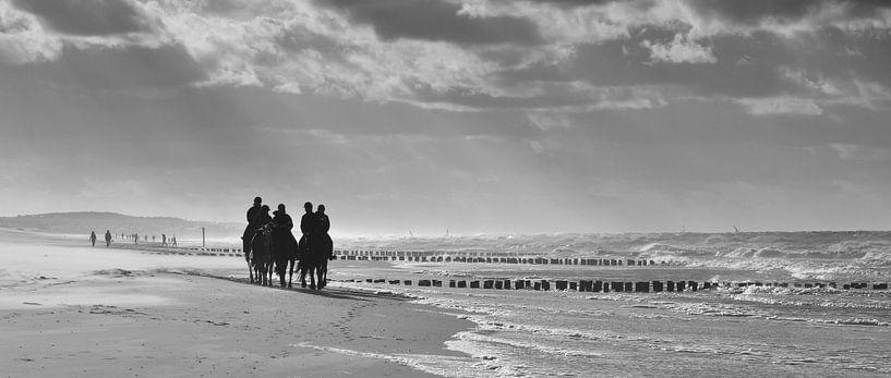 Pferde am Meer von Zeeland op Foto
