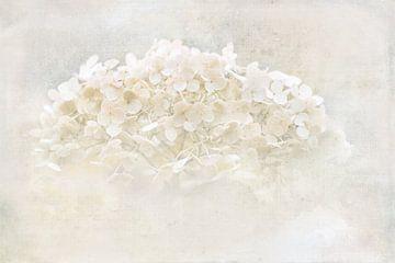 Hydrangea im Herbst von Rietje Bulthuis