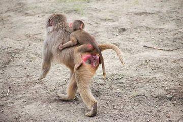 mama aap met baby van