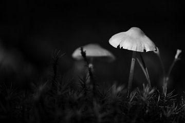 Miniatuur wereld in zwart-wit van Gerard de Zwaan