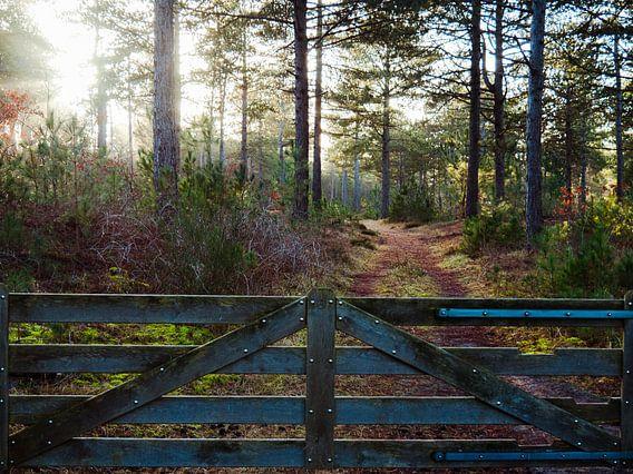 Zaun mit Wald