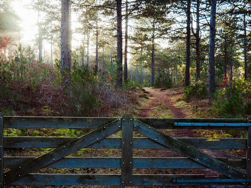 Zaun mit Wald von Martijn Tilroe