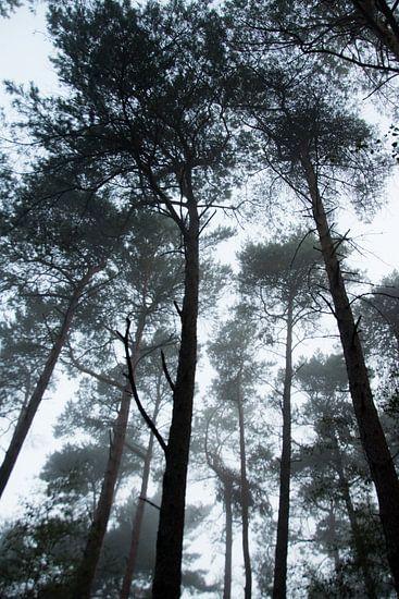 Mist in het bos van Milou Oomens