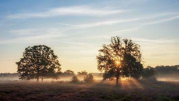 Goodmorning nature van Lex Schulte