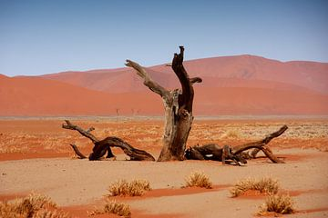 NAMIBIA ... Namib Desert Tree van Meleah Fotografie