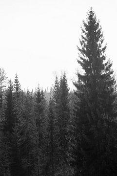 schwarze und weiße Kiefer von Nienke Stegeman