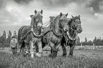 Trekpaarden, zwart/wit van Lisette van Peenen