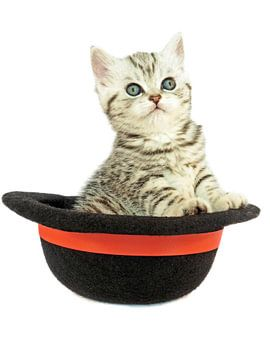 Tabby kätzchen sitzt aufrecht in einem schwarzen Bowler Hut von Ben Schonewille