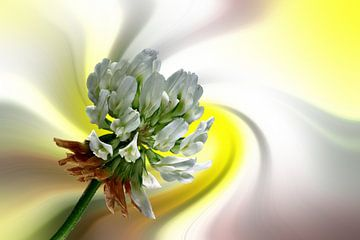 Kleeblüte vor einem farbenfrohen abstrakten Hintergrund von Harry Adam