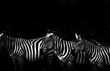 zebras sur Francisco de Almeida