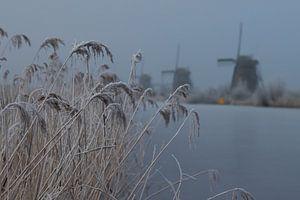 Doorkijkje molens Kinderdijk