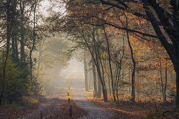 A Walk van Johanna Blankenstein