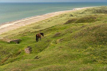 Groen strand aan de Oostzee in Denemarken van Peter Schickert