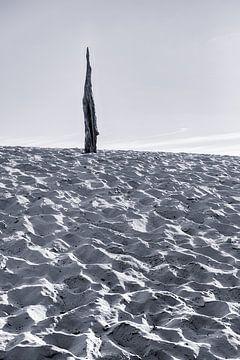 Souche dans le sable