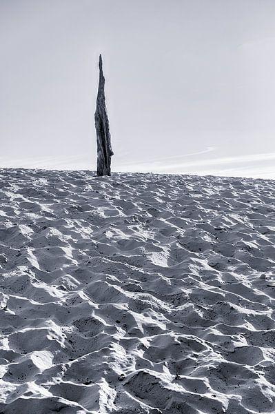 Souche dans le sable sur Mark Bolijn