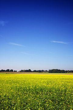 Senfkornfeld mit Bäumen und einer Farm von Jan Brons