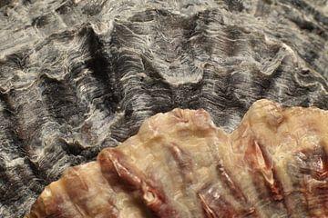Oesterschelpen links van