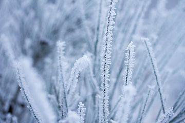 Makroaufnahme einer Schneeflocke von Karijn Seldam