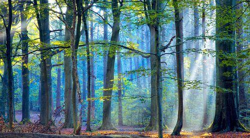 Het betoverde bos  van Lars van de Goor