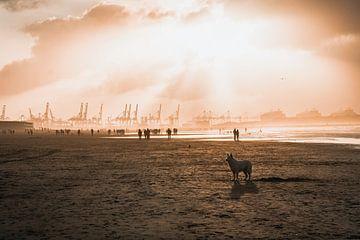 Chien sur la plage de Hoek van Holland sur Marcel Kool