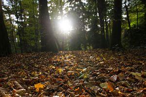 Zonnestralen op een bospad