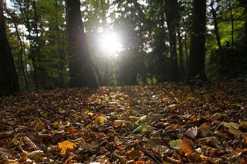 Sonne auf einem Waldweg von Frans Blok