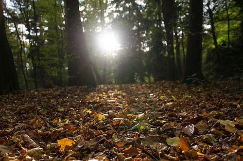 Zonnestralen op een bospad van
