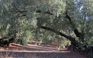 bomenboog van jan katuin