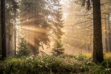Zonnestralen in het bos van Jeroen Luyckx