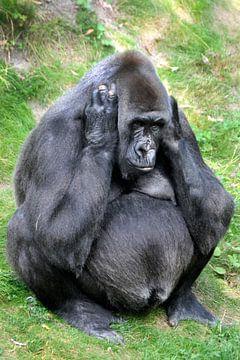 Gorilla moeder sur Michel Groen