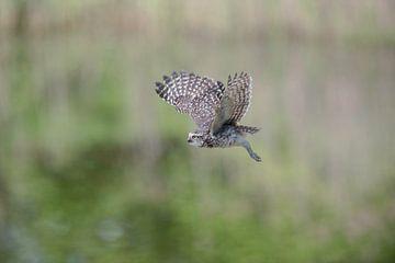 Holenuiltje bereidt de landing voor. van Larissa Rand